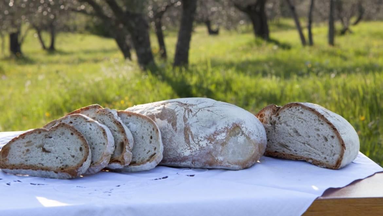 Tuscan Bread